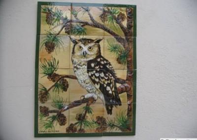 Owl in Pine Tree